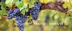 Photo for: Ciatti Company - The World's Largest Broker Of Bulk Wine