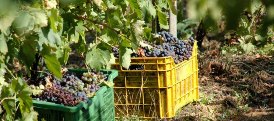 Photo for: US Australian Wine Export Report