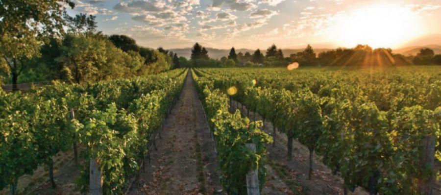 Photo for: Delicato Family Vineyards