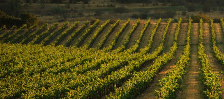 Photo for: Turrentine Brokerage - Bulk Wine and Grape Brokers