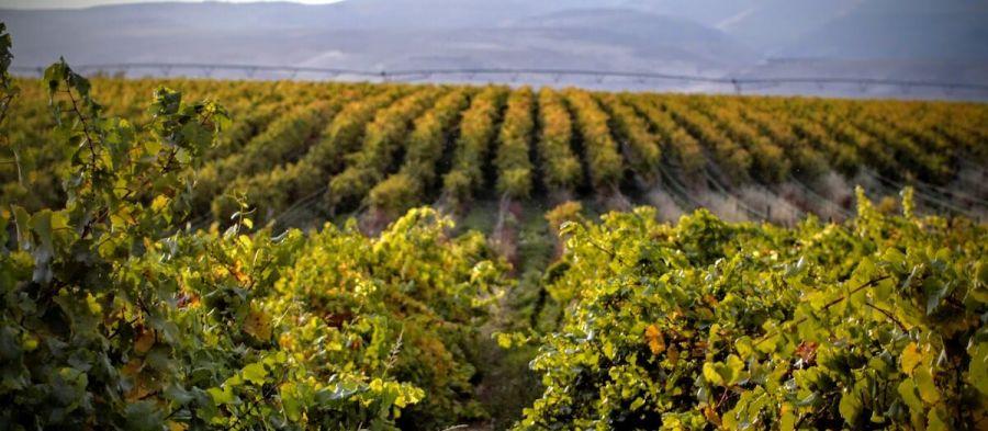 Photo for: Meet Ancient Lake Wine Company at IBWSS
