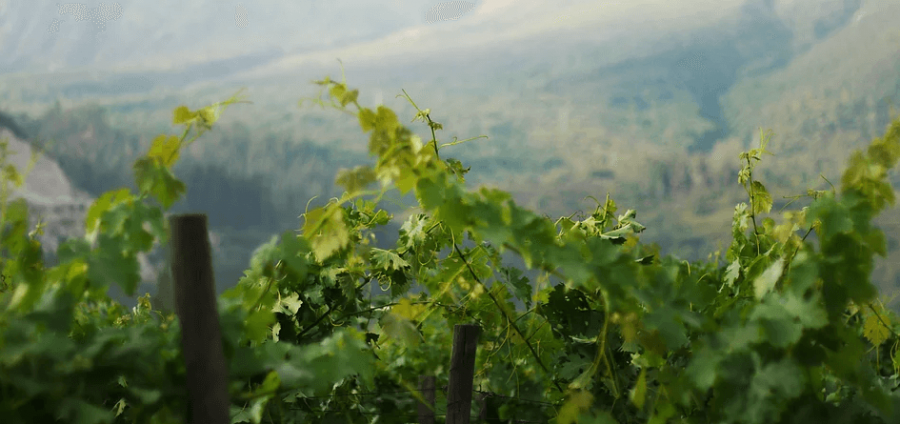 Photo for: Trasiego Wines: Producer of Premium Wines