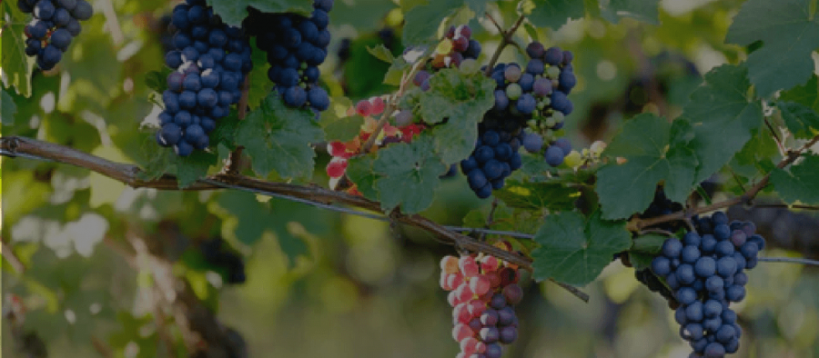 Photo for: Turn Key Wine Brand: A Family of Winegrowers